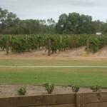 Mandoon estate wine tasting swan valley vineyard
