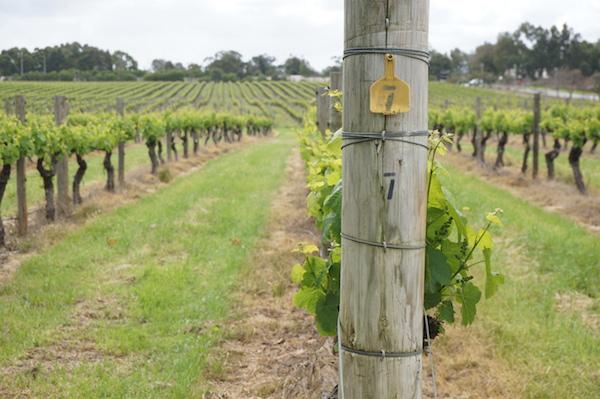 RedBalloon Perth Wine Cruise - Sandalford Estate