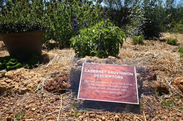 Cabernet Descriptors Wine Sensory Garden at Whicher Ridge Wines, Geographe Wine Region
