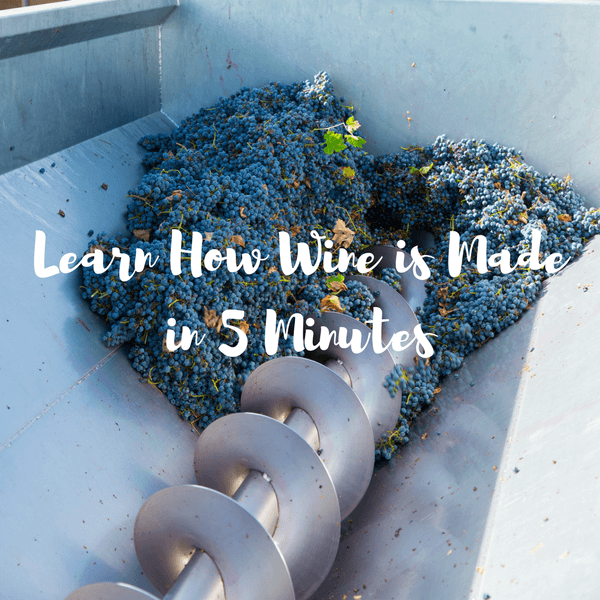 How is wine made? Learn the Basic Steps in Only 5 Minutes!