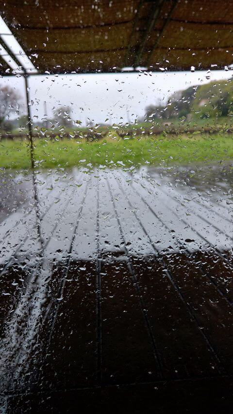 Rain in a South of France Vineyard